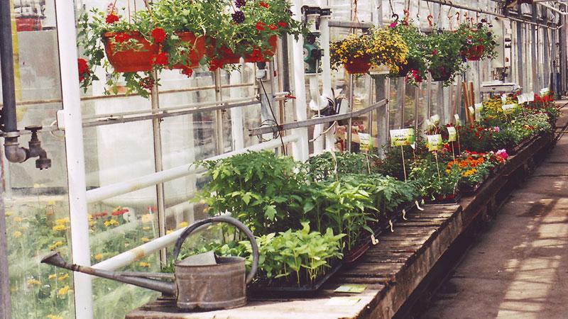 Balkonpflanzen & Gemüse